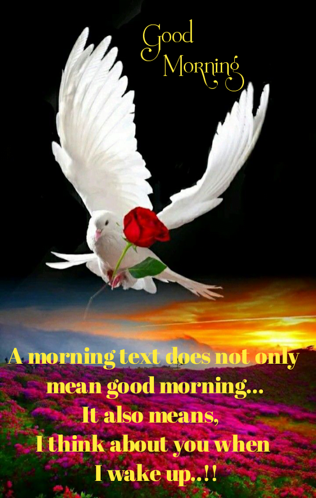 White dove flying with rose, Good morning best quotes.
