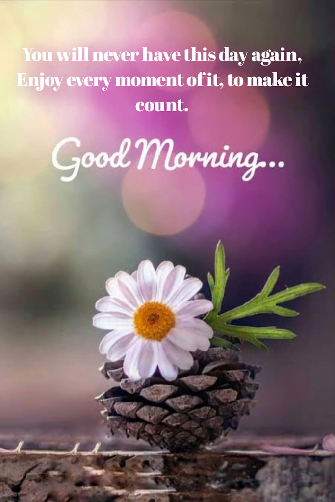 White daisy flower in pine seed, Good morning best quotes.