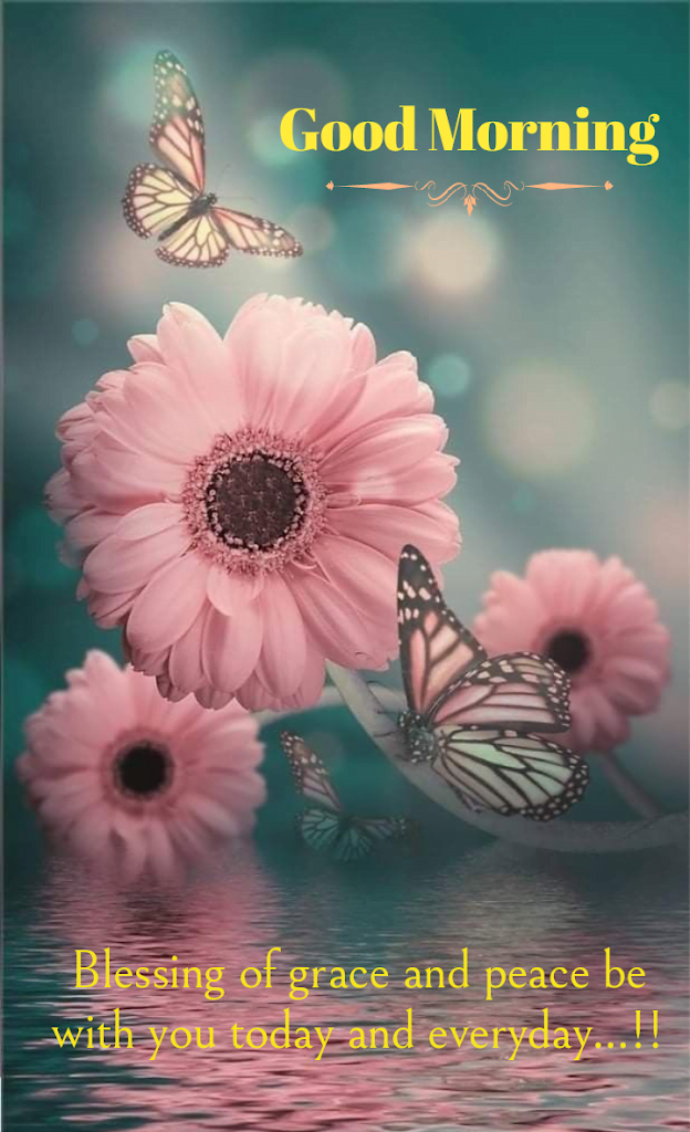 Butterfly on daisy flowers, Good morning best quotes.